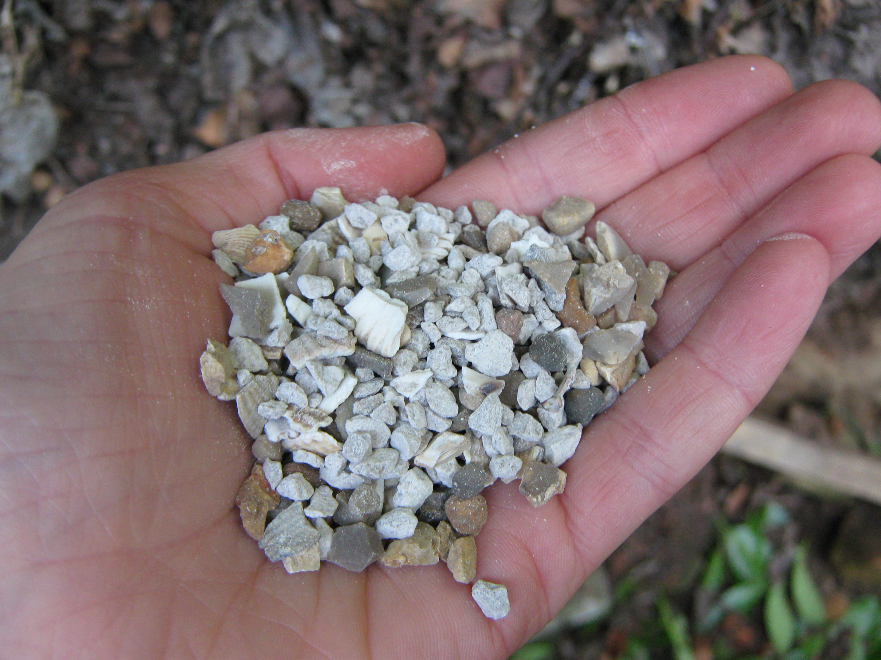 A close up of some seashell grit used for chicken feed