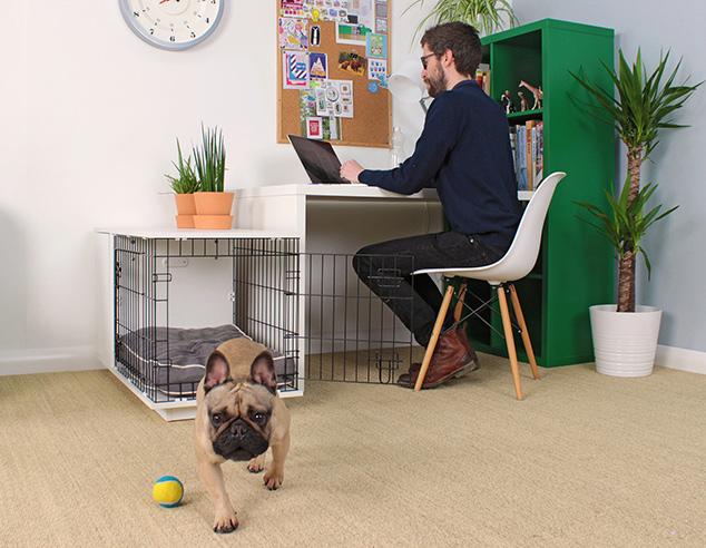 niche-chien-bureau