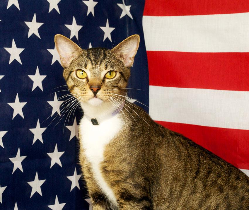 Cats conquer America