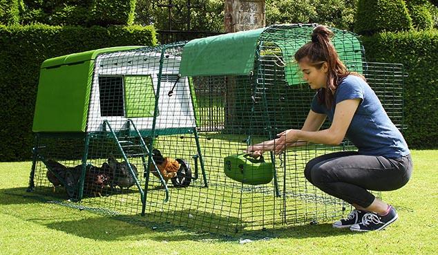 Ouvrez la porte de l'enclos pour remplir la mangeoire et l'abreuvoir en plastique de vos poules