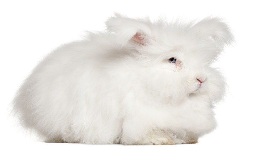 Fluffy Ones Small Ones Big Ones About Rabbits Rabbits Guide Omlet Uk