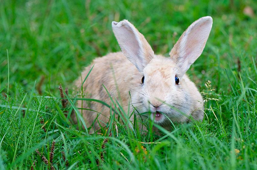 Rabbit-Proofing The Garden | Rabbit FAQs | Rabbits | Guide