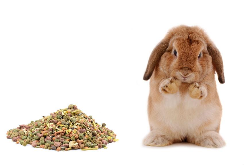 baby Rabbit food