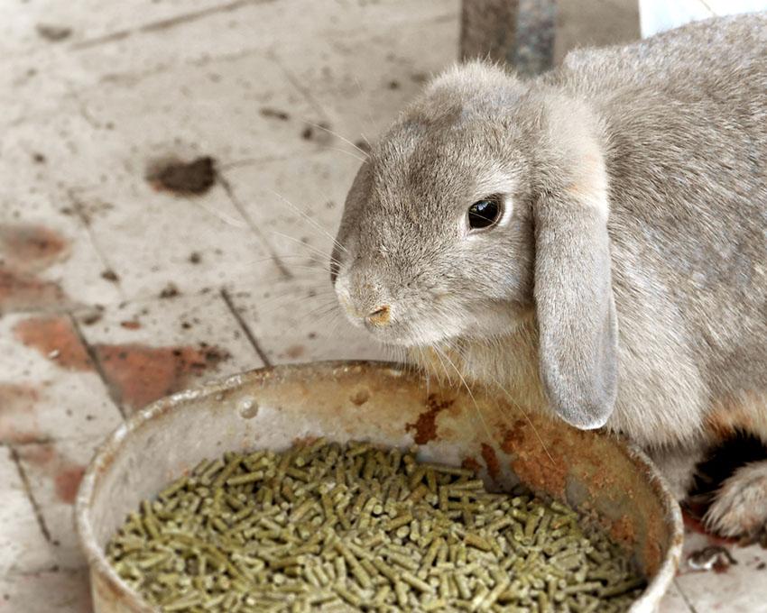 Rabbit feeding