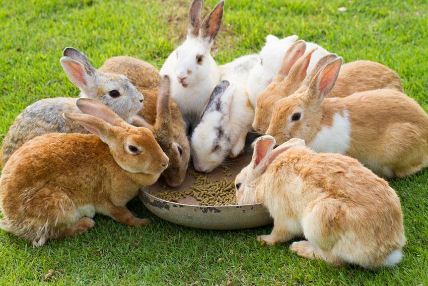 Dry Rabbit food