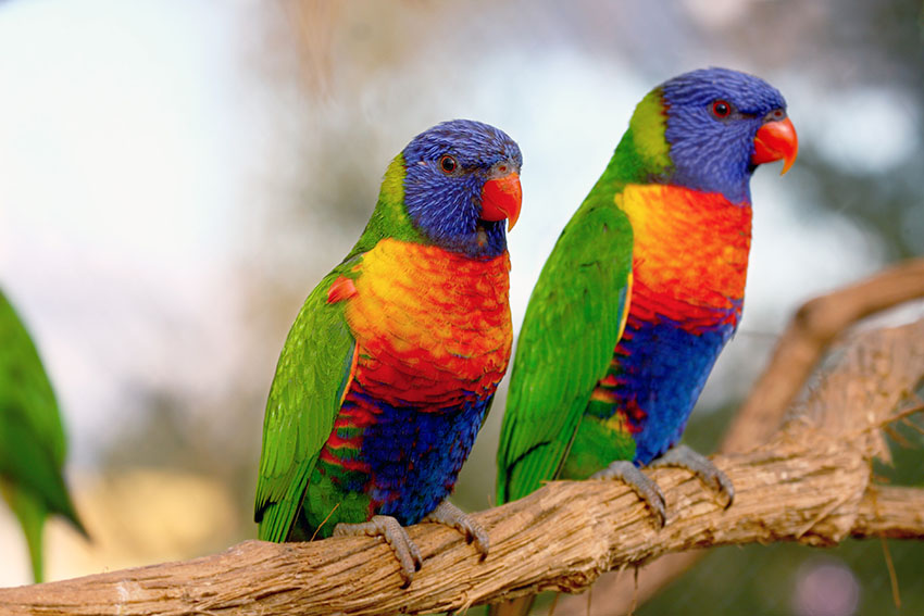Image result for types of parrots