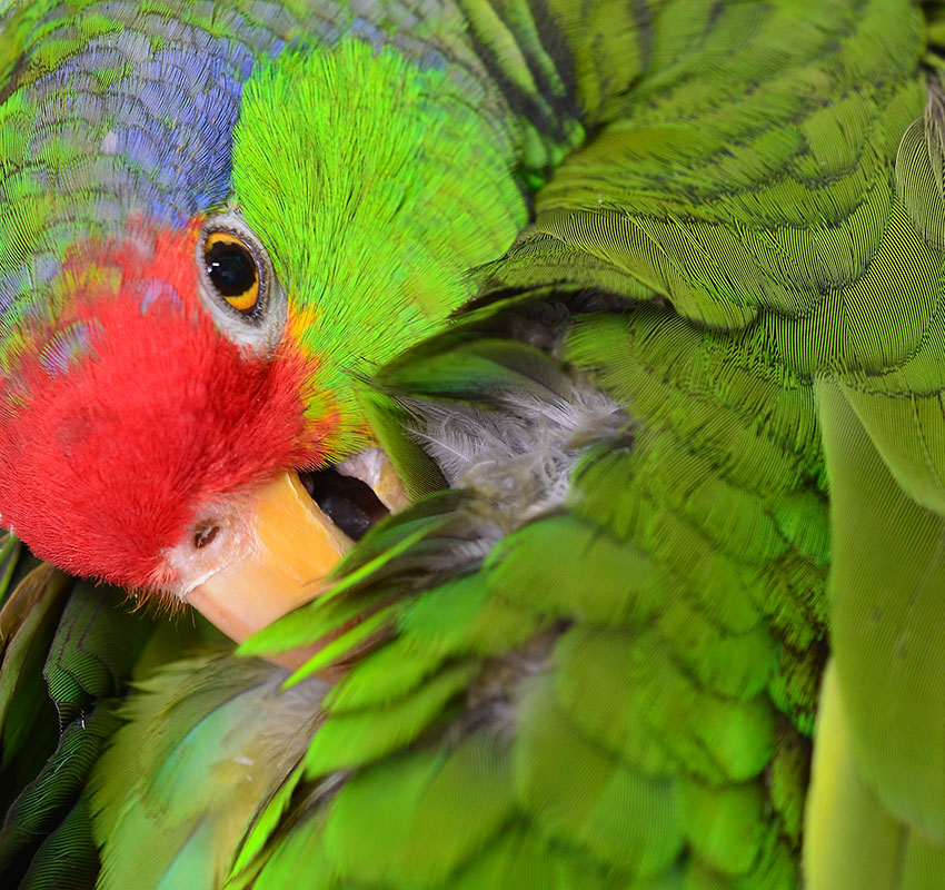 Catching Diseases From Parrots | Parrots and Disease