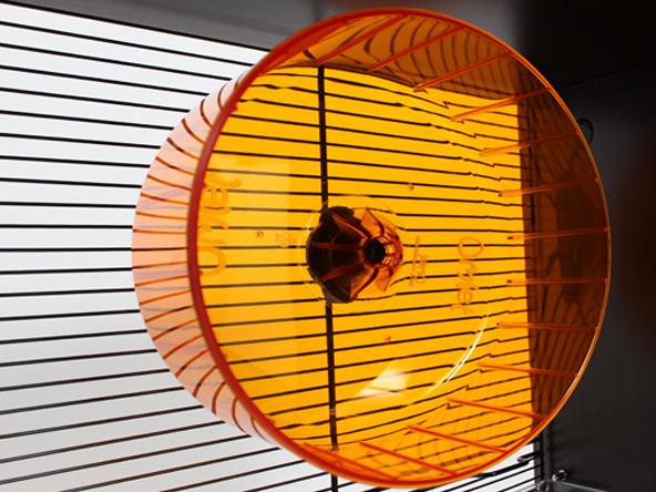 roue-d-exercice-silencieuse-hamster-gerbille