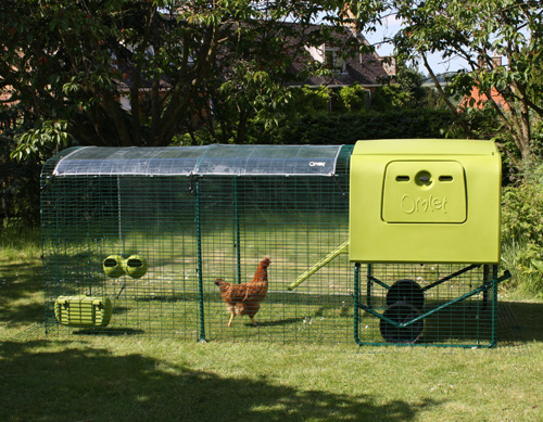 Stephanie Croft's chickens enjoy their Eglu Cube and Run in the summer garden