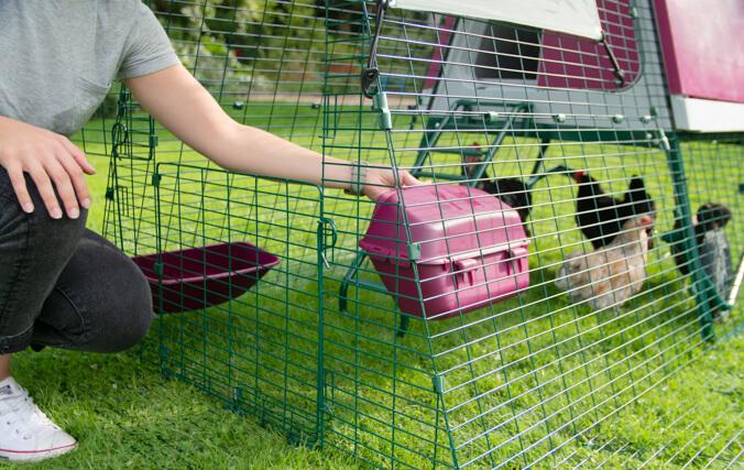 Opening the top door of the Eglu Go UP chicken enclosure.