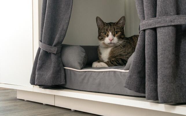 En katt ligger på sängen inne i katthuset Maya Nook