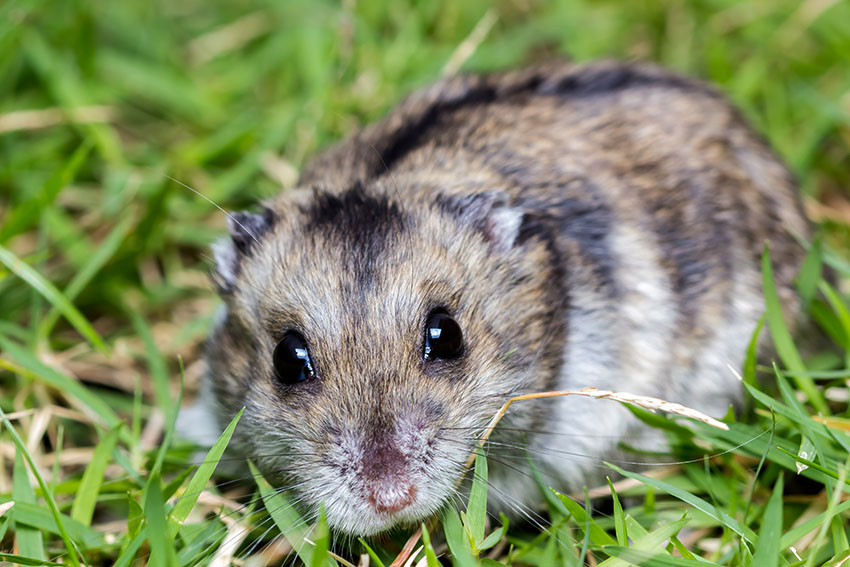 Hamster Common Illnesses | Hamster Illnesses | Hamsters | Guide