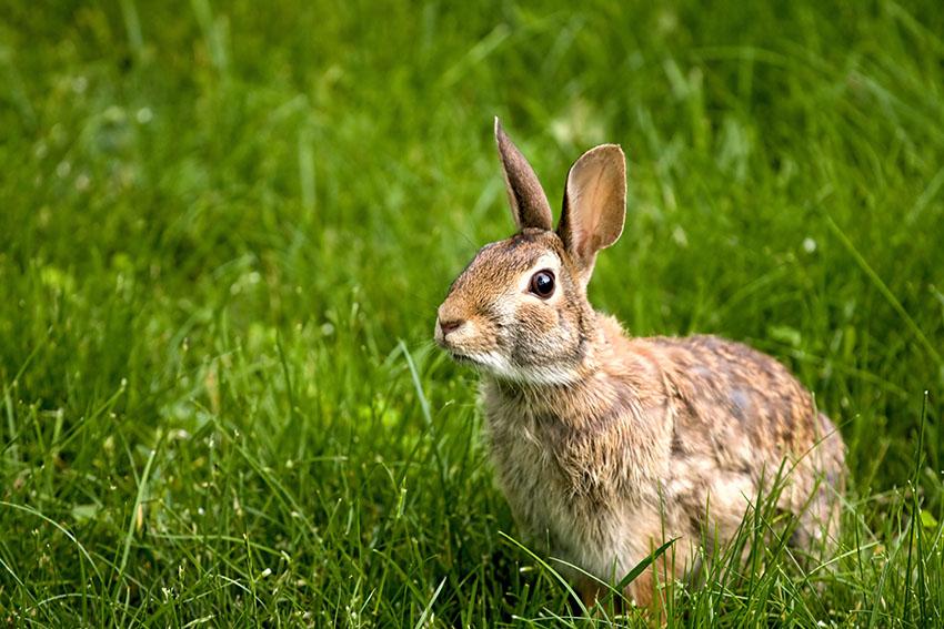 Should I Take Care Of Wild Rabbits Should I Get Rabbits Rabbits Guide Omlet Uk