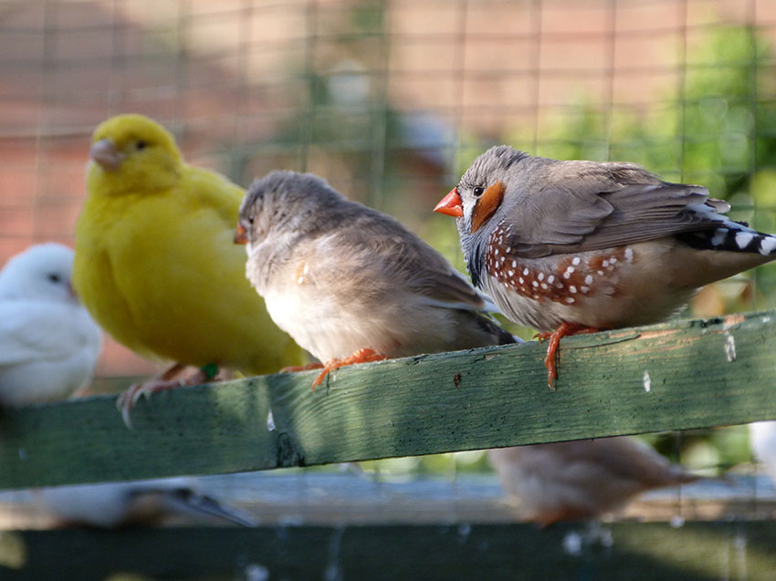 keeping aviaries free of pests is important